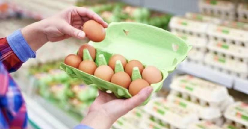 Egg Carton Sales Manufacturer